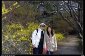 韓國櫻花:韓國243.jpg