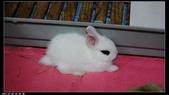 寶貝兔子的照片:寶貝們003.jpg