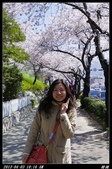 韓國櫻花:韓國036.jpg