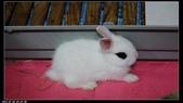 寶貝兔子的照片:寶貝們004.jpg