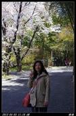 韓國櫻花:韓國108.jpg