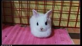 寶貝兔子的照片:寶貝們007.jpg
