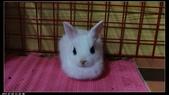 寶貝兔子的照片:寶貝們008.jpg
