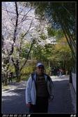 韓國櫻花:韓國109.jpg