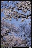 韓國櫻花:韓國039.jpg