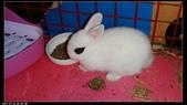 寶貝兔子的照片:寶貝們010.jpg