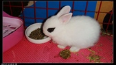 寶貝兔子的照片:寶貝們011.jpg