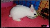 寶貝兔子的照片:寶貝們012.jpg