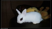 寶貝兔子的照片:寶貝們016.jpg
