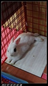 寶貝兔子的照片:寶貝們017.jpg