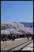 韓國櫻花:韓國046.jpg