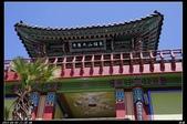 韓國櫻花:韓國118.jpg