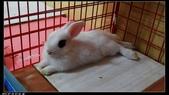 寶貝兔子的照片:寶貝們018.jpg