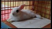 寶貝兔子的照片:寶貝們019.jpg