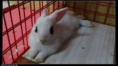 寶貝兔子的照片:寶貝們020.jpg