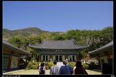 韓國櫻花:韓國119.jpg