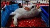 寶貝兔子的照片:寶貝們022.jpg