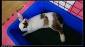 寶貝兔子的照片:寶貝們023.jpg