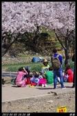 韓國櫻花:韓國048.jpg
