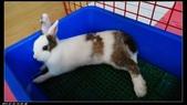 寶貝兔子的照片:寶貝們024.jpg