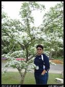 20120408花開了:花開了02.jpg