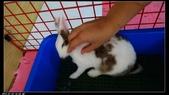 寶貝兔子的照片:寶貝們026.jpg