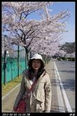 韓國櫻花:韓國205.jpg