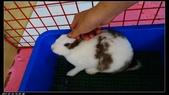 寶貝兔子的照片:寶貝們027.jpg
