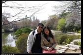 韓國櫻花:韓國256.jpg
