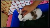 寶貝兔子的照片:寶貝們028.jpg
