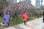 2017新竹公園櫻花季 106.03.12:8.jpg