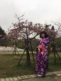 2017新竹公園櫻花季 106.03.12:4.jpg