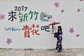 2017新竹公園櫻花季 106.03.12:9.jpg