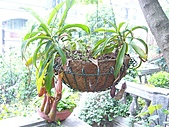 花 園:P1030782