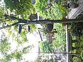 花 園:P1030783