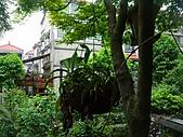 花 園:P1030785