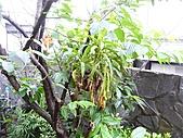 花 園:P1030787