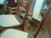 鍾狗:20060923