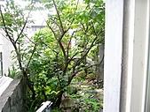 花 園:P1030788