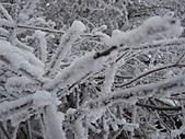 冰雪峨嵋:DSCF0115.jpg