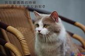 20090523 三峽遇到貓:05-DSC_7212