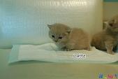 20100308 2009 kittens:DSC_7680