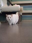 20081026搬家了:cat01