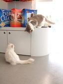 20081026搬家了:cat05