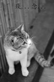 20090523 三峽遇到貓:07-DSC_7234