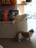 20081026搬家了:cat04