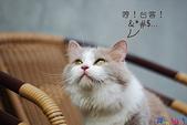 20090523 三峽遇到貓:06-DSC_7213