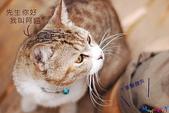 20090523 三峽遇到貓:02-DSC_7221