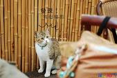 20090523 三峽遇到貓:03-DSC_7233