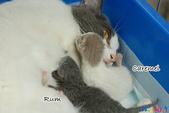 20100308 2009 kittens:DSC_7656